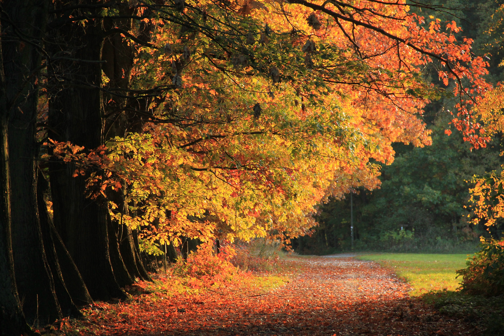 Weg in den Herbst