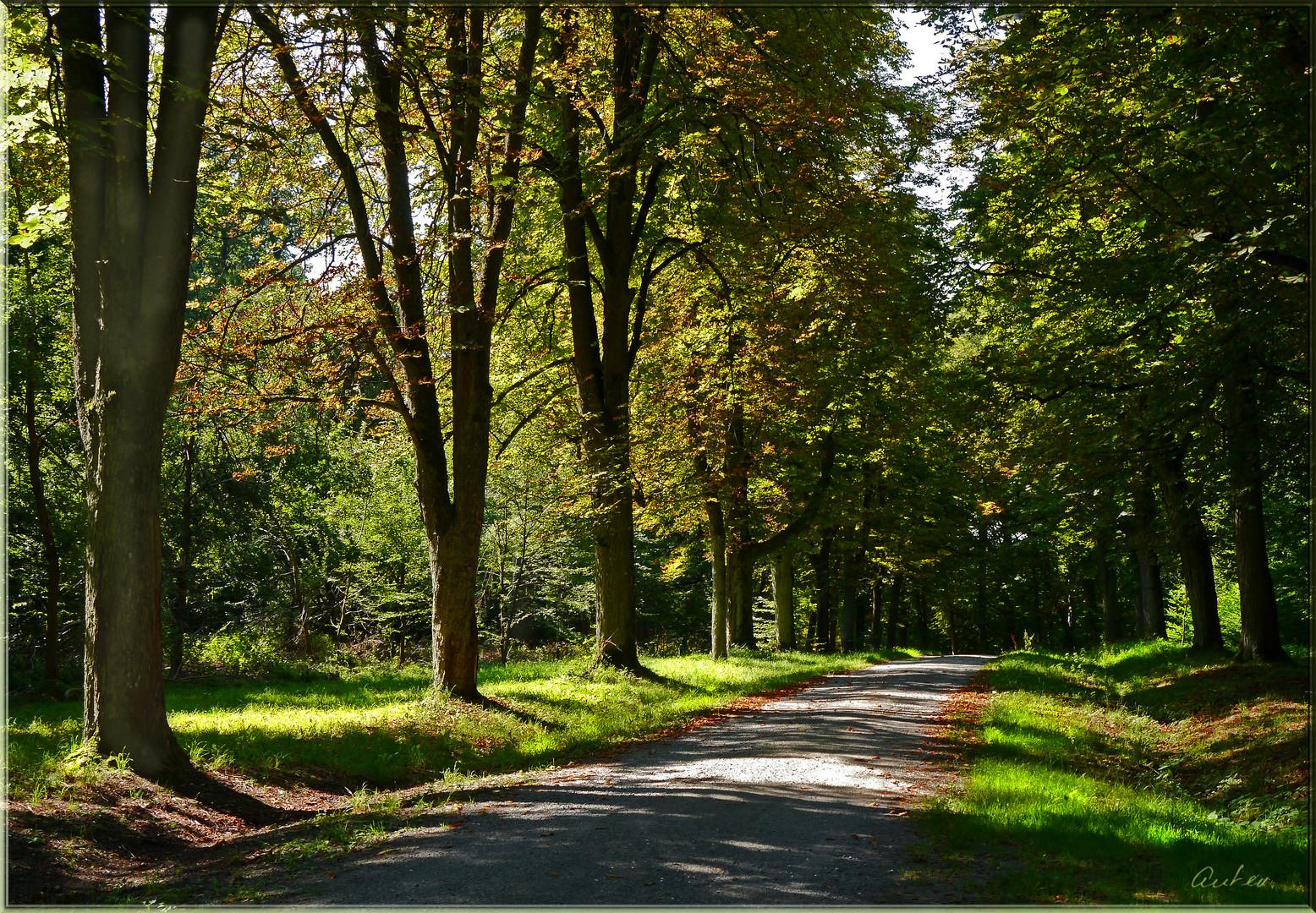 Weg in den sonnigen Herbst