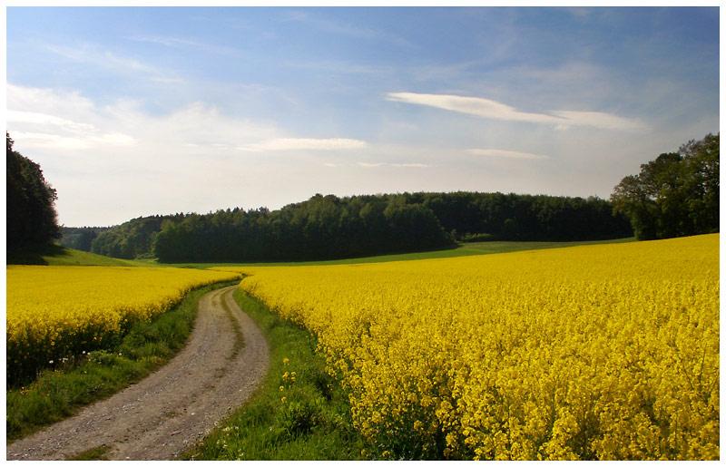 Weg ins Gelb