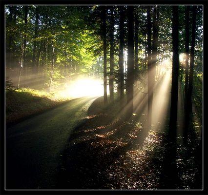 Weg ins Licht