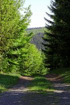Weg nach Friesnehagen