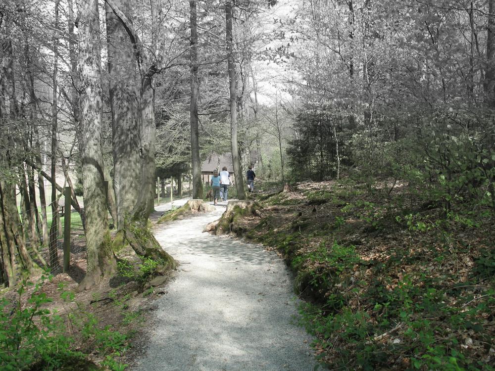 Weg Wildpark in Heigenbrücken