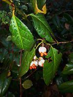"""Weg zum Bus morgens : """"mini"""" nasse Beeren, man sieht sie kaum,"""