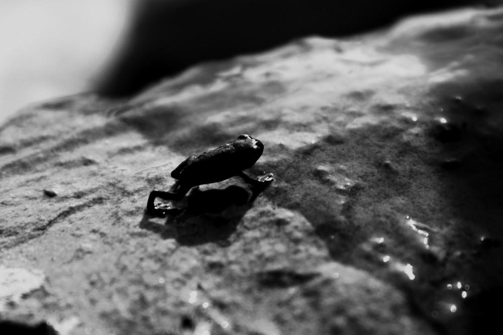 Weg zum großen Frosch