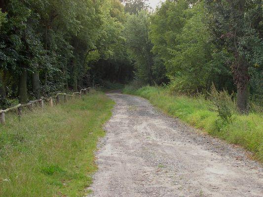 Weg zum Hummelberg