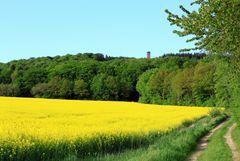 -Weg zum Sollingturm...