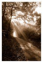 Weg zum Sonnenschein