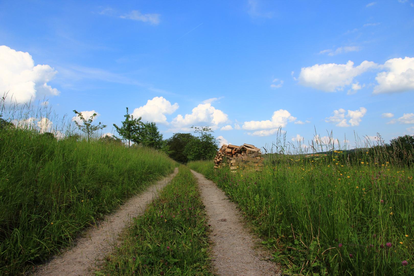 Weg zur Murrquelle