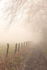 Wege im Naturschutzgebiet