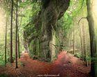 Wege im Wald