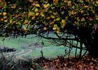 Wege in den Herbst ...