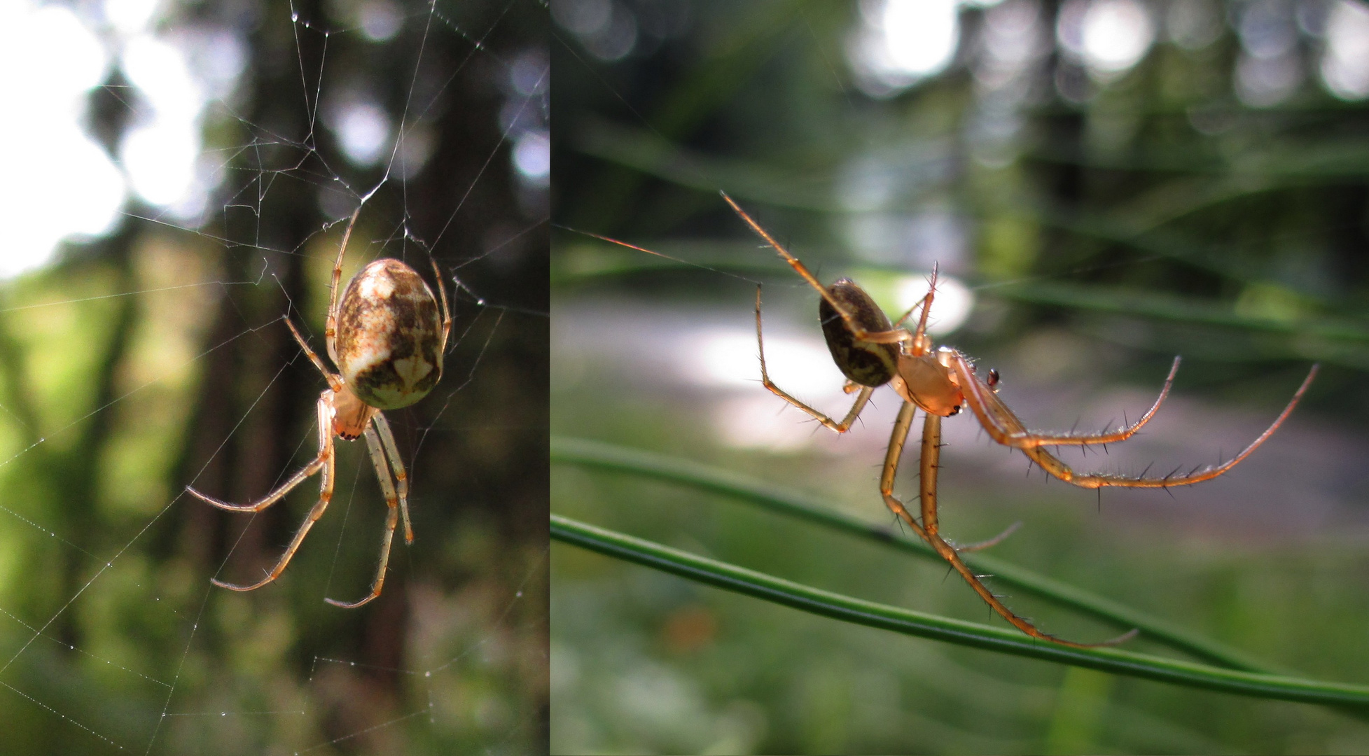 Weibchen und Männchen 1