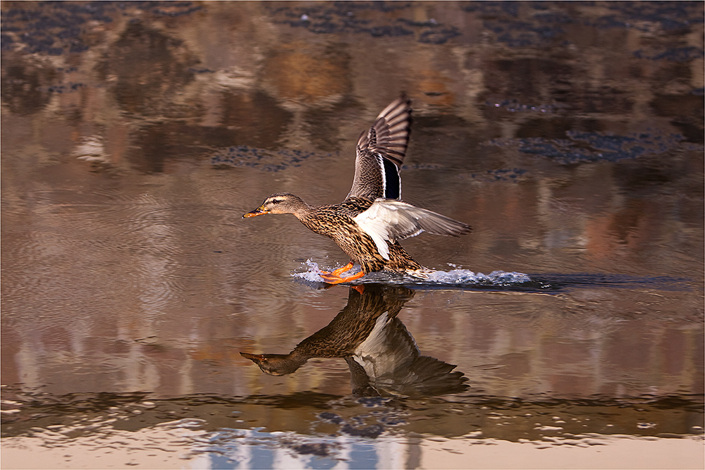 weibliche Landung