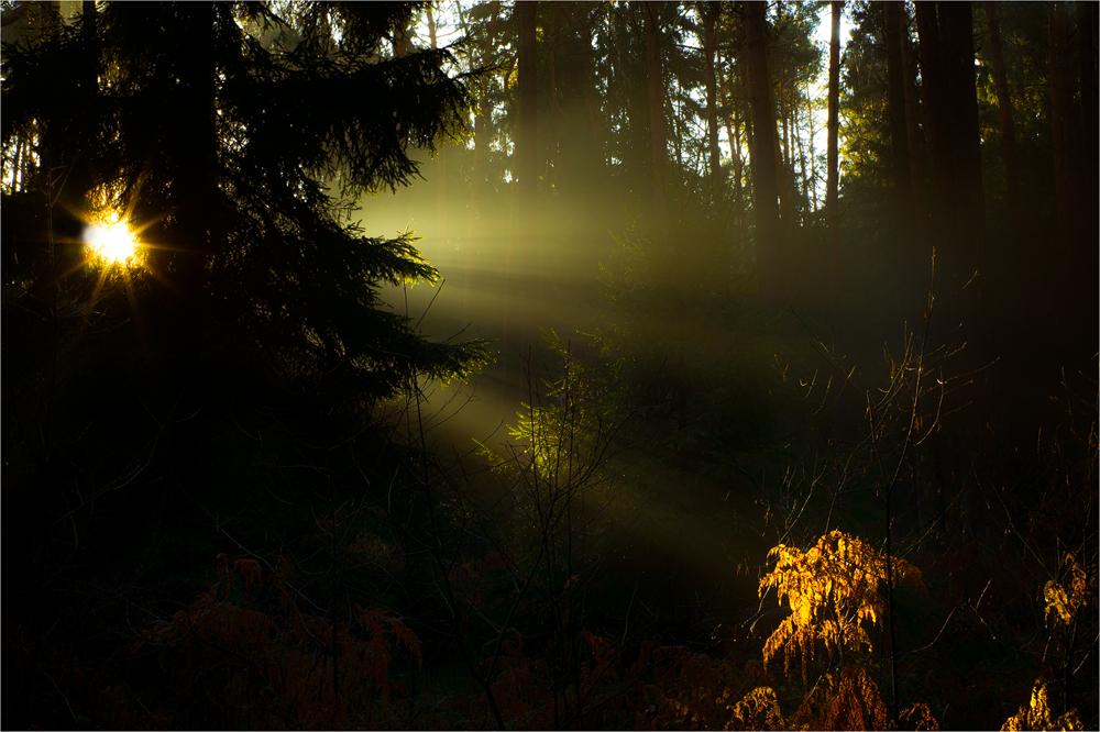 Weiches Morgenlicht