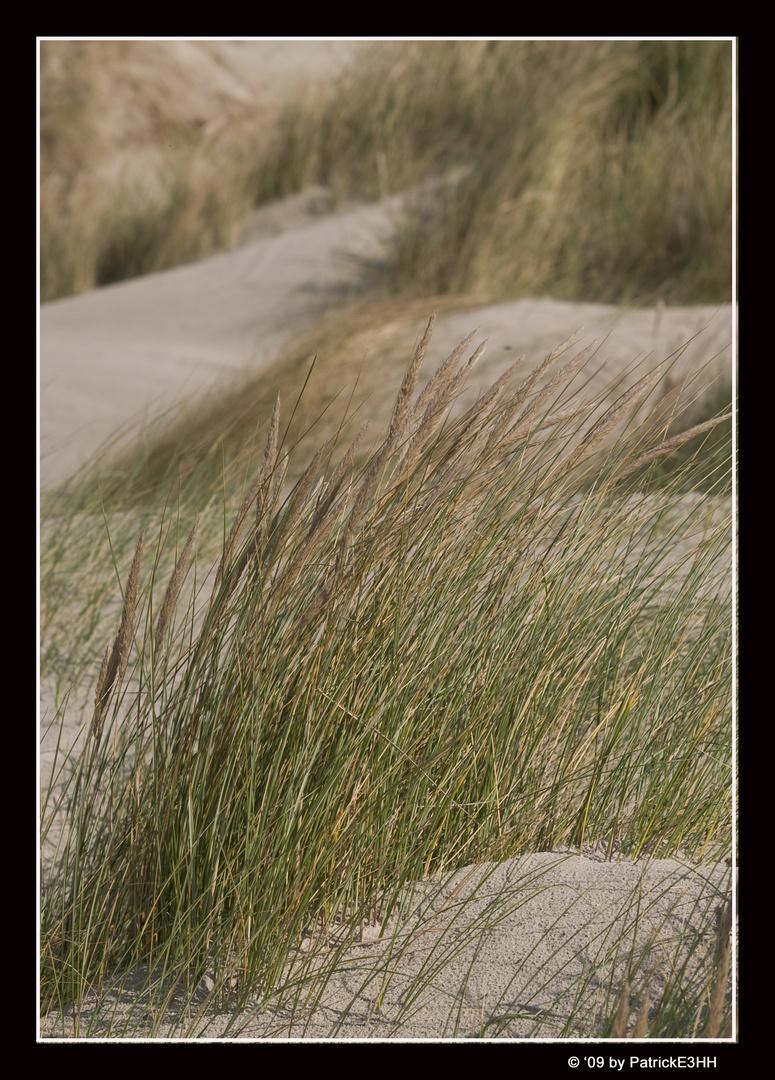 Weide am Strand von Dänemark