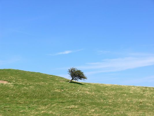 Weide auf Hiddensee