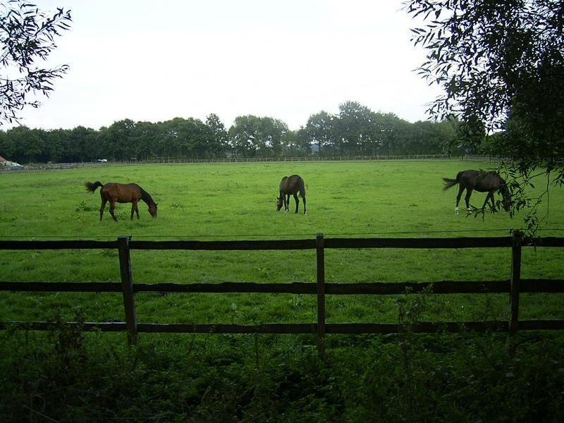 Weide im Heidfeld