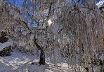 Weide im Schnee