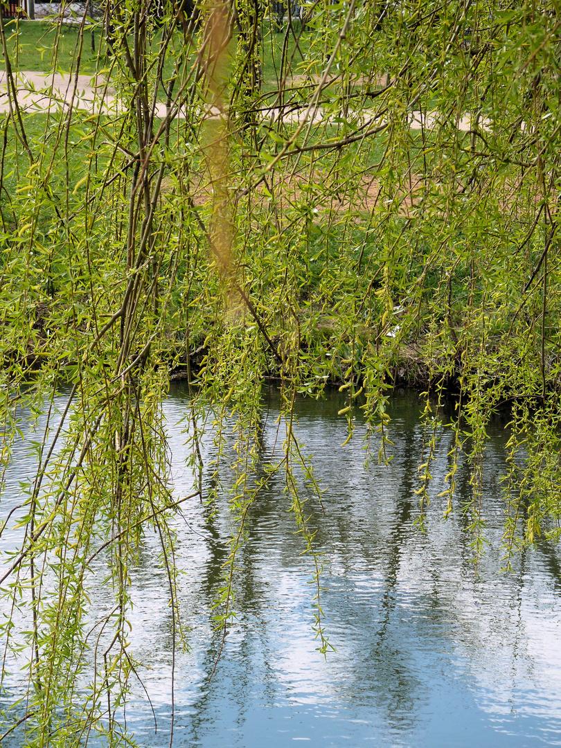 Weide im Wasserspiel