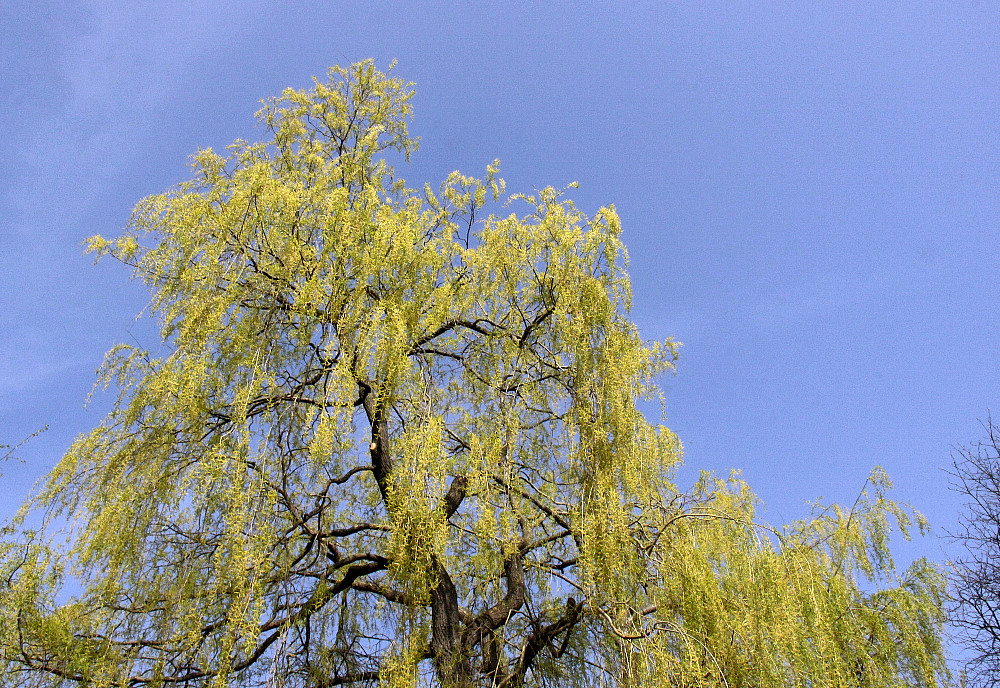 Weide vor blauem Himmel