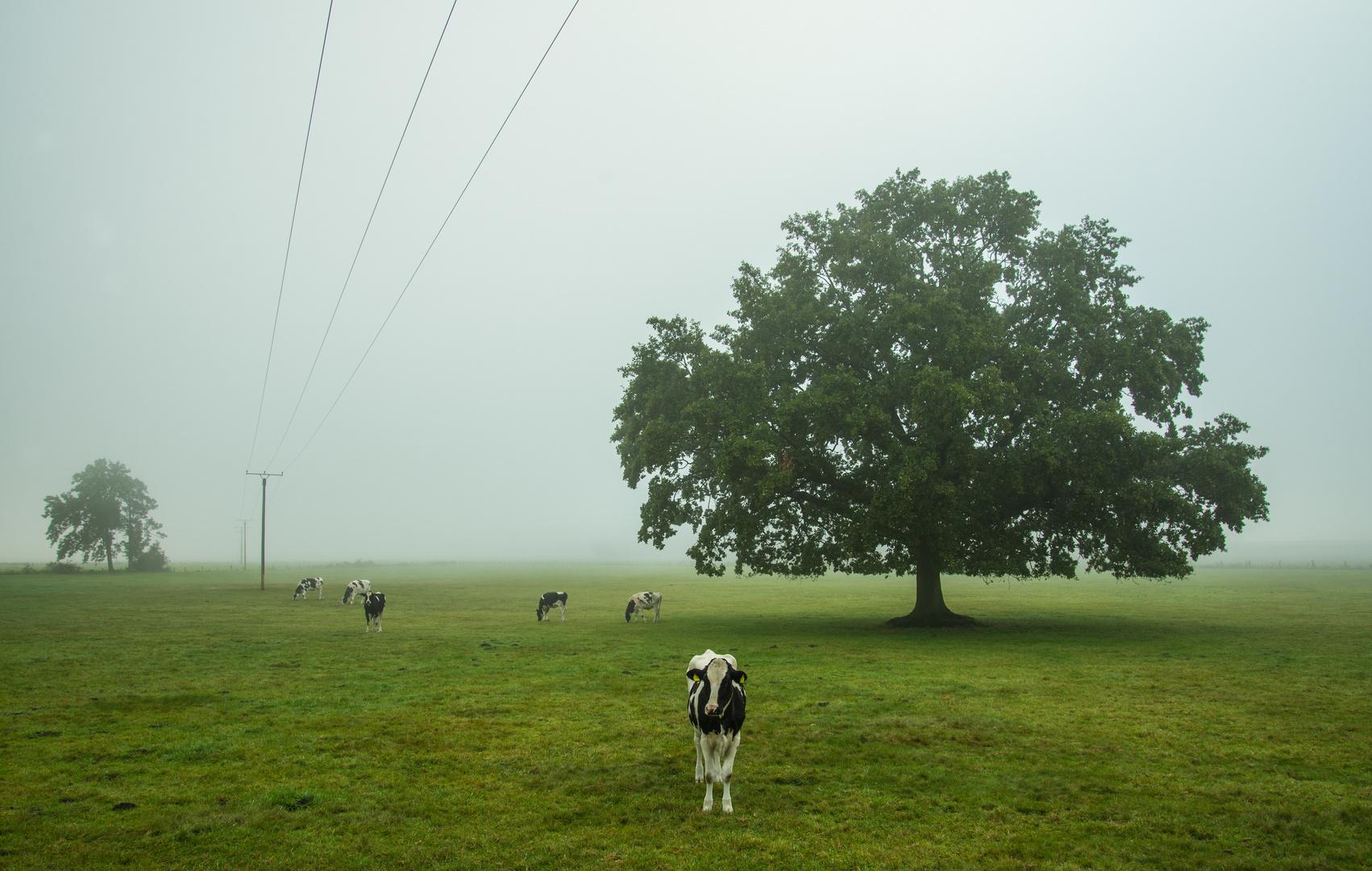 Weideland im Nebel