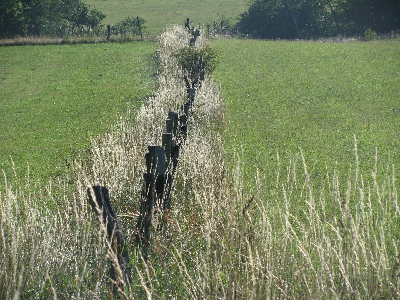 Weiden (Eifel)