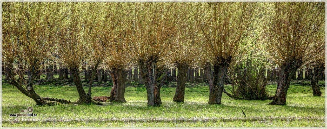 Weiden im Bingenheimer Ried