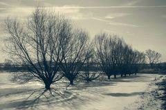 Weiden im Eis