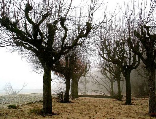 Weiden im Nebel