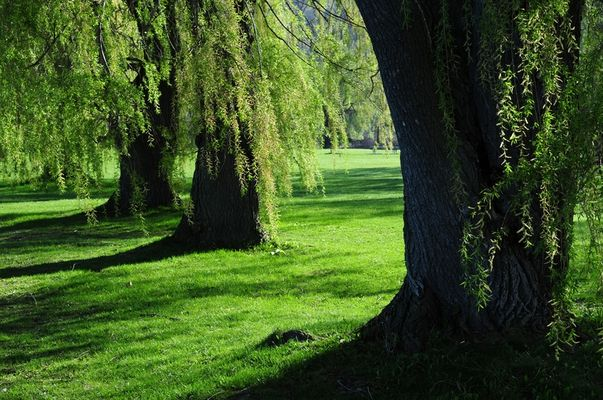 Weiden in Ithaca (NY)
