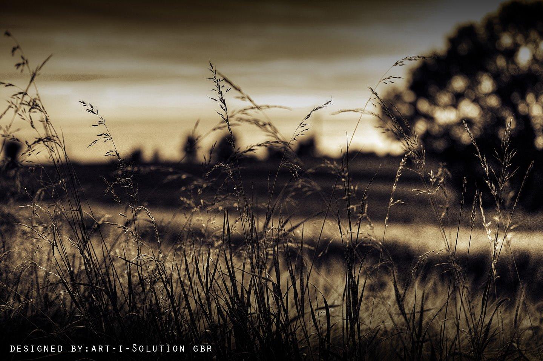 Weidenland