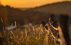 Weidezaun oder Sonnennuntergang