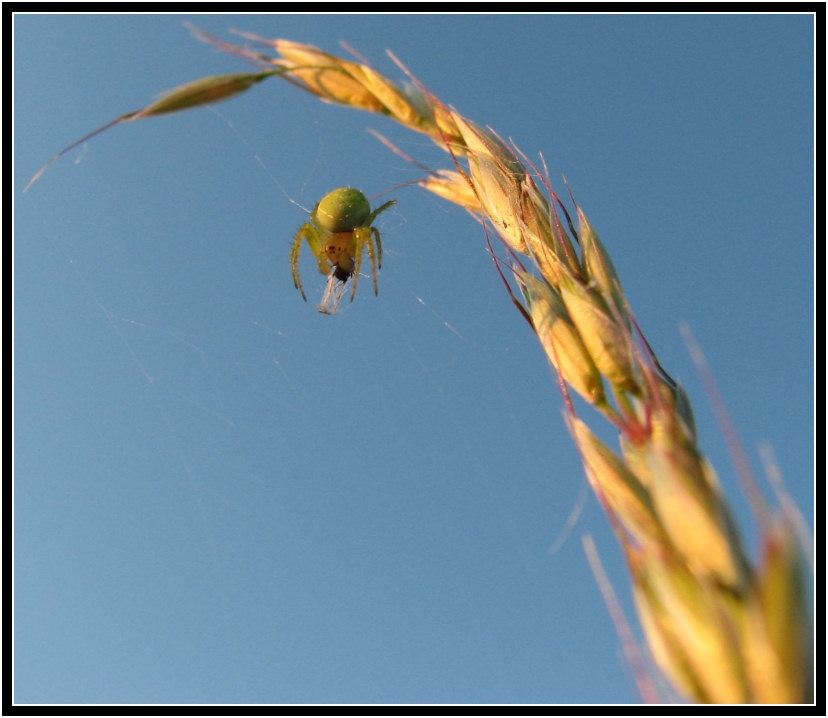weightless spider