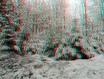 _ Weih nachts Bäume_