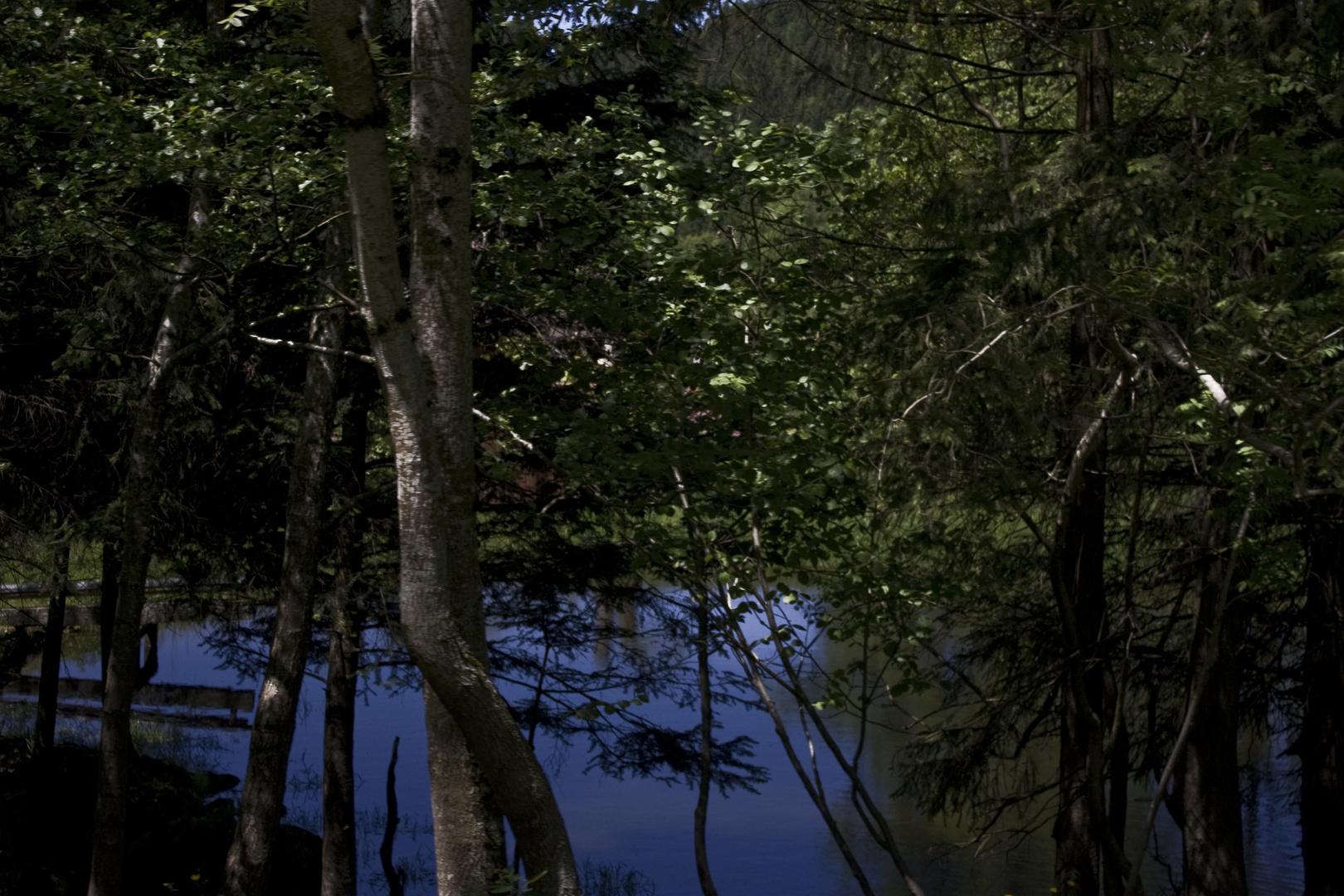 Weiher im Schwarzwald