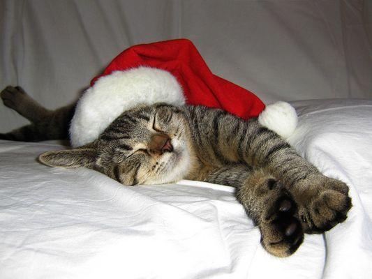 weihnachten fällt aus, bin ja sooooo müde...