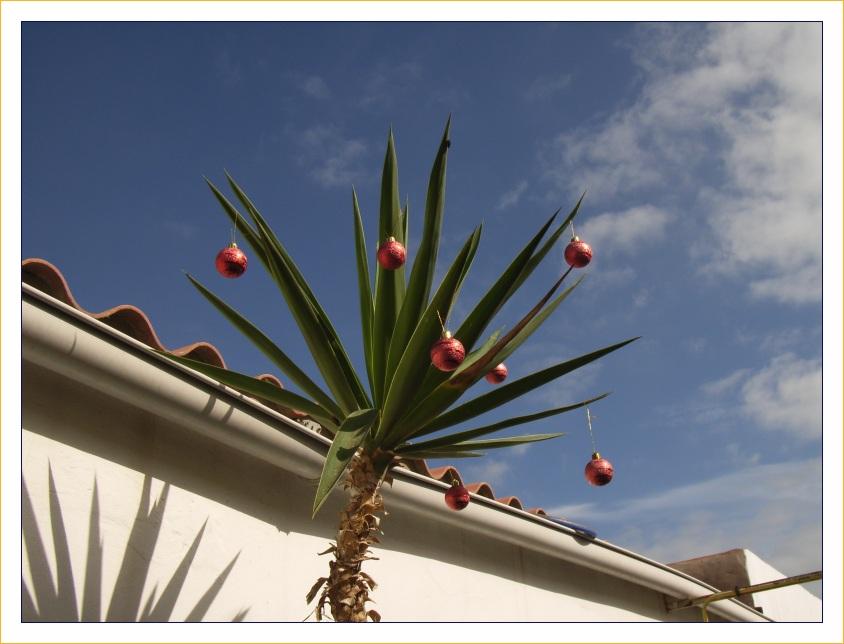 Weihnachten in der Sonne
