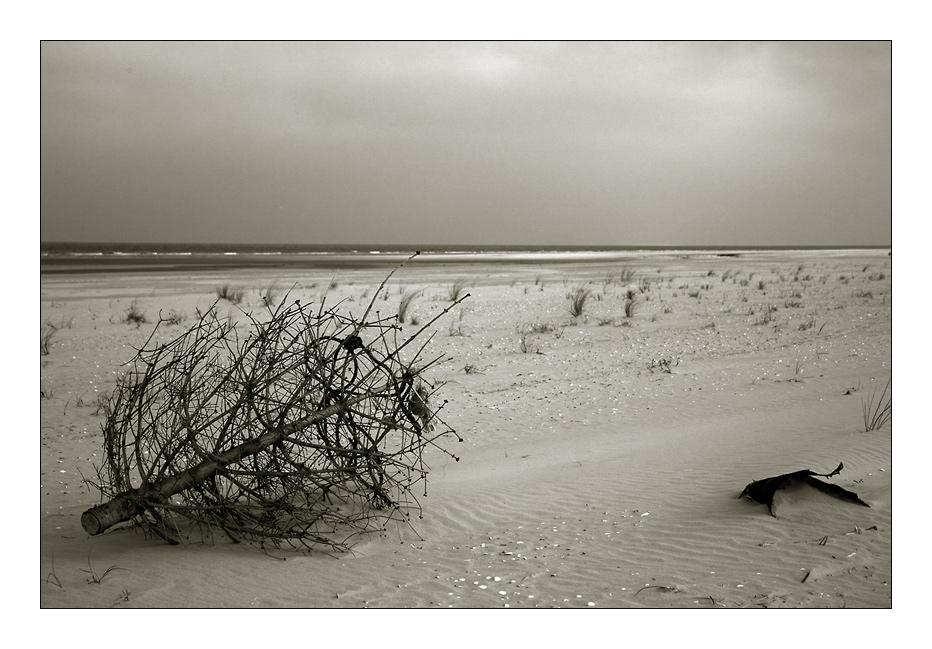 . weihnachtliche Grüße von der Nordsee ...