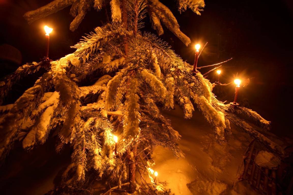 Weihnachtsabend im Wald 2