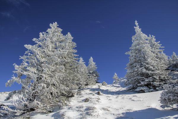 Weihnachtsbäume im Winterurlaub ;-)