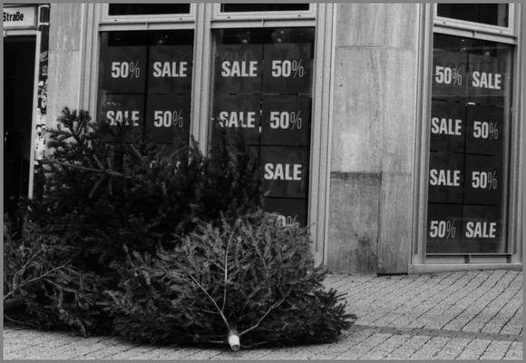 Weihnachtsbäume, reduziert...