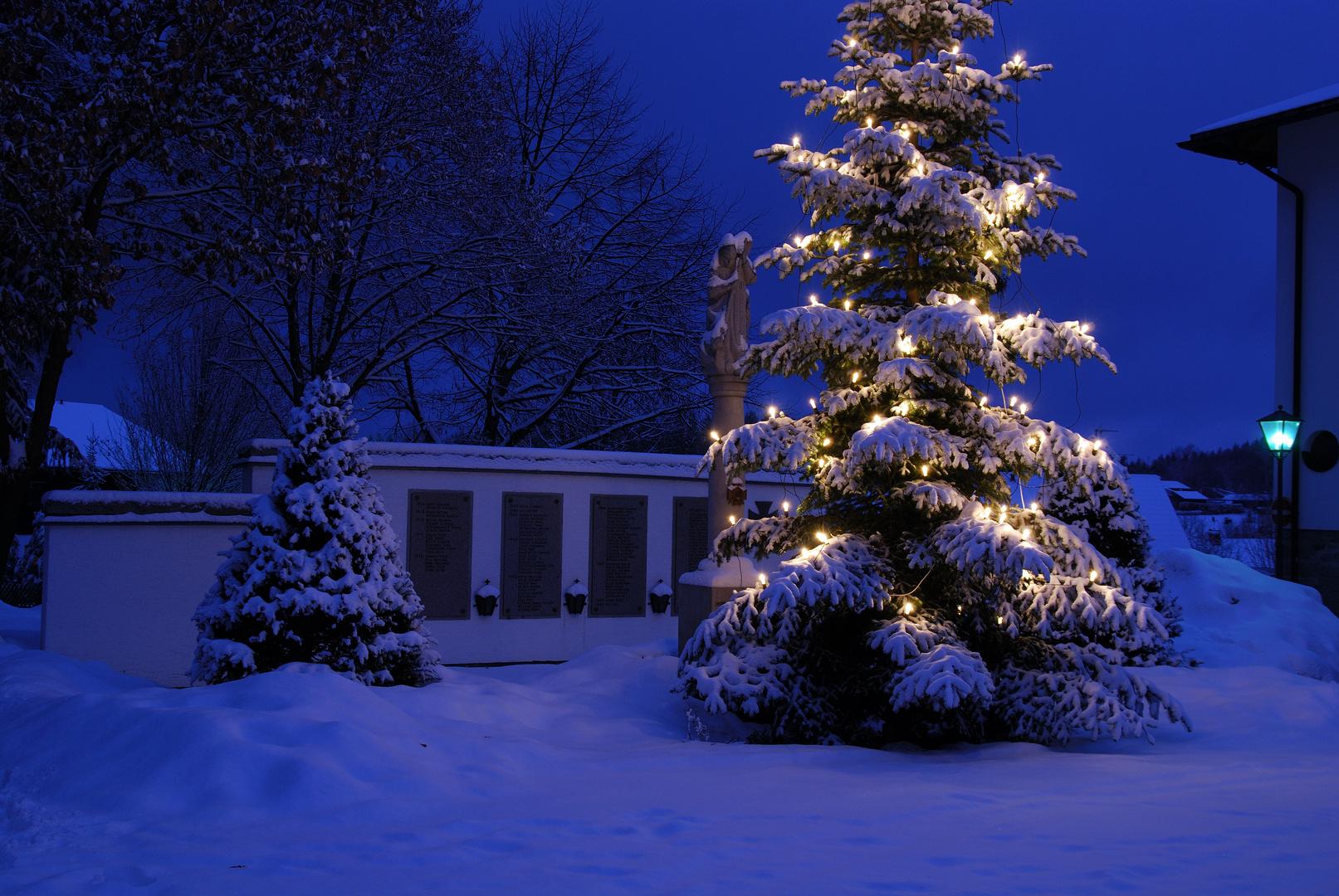 weihnachtsbaum in klingenbrunn foto bild deutschland. Black Bedroom Furniture Sets. Home Design Ideas