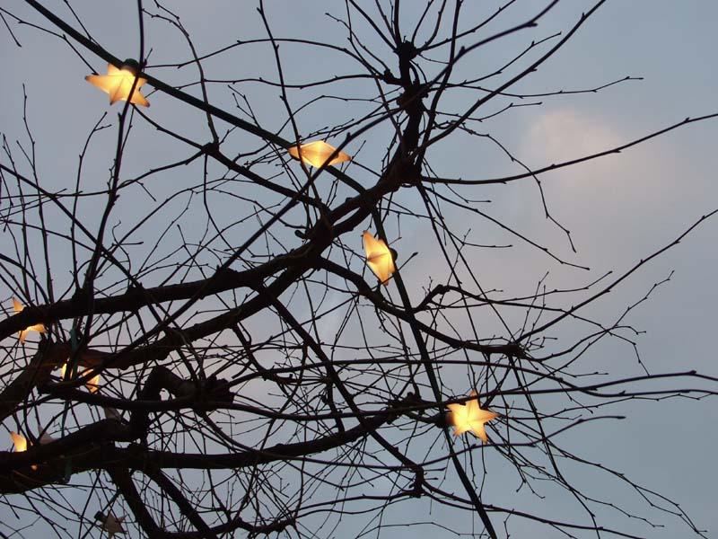weihnachtsbaum ohne nadeln bild foto von joachim brockmann aus weihnachts bilder. Black Bedroom Furniture Sets. Home Design Ideas