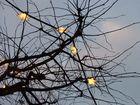 Weihnachtsbaum ohne Nadeln