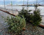 Weihnachtsbaumschicksale