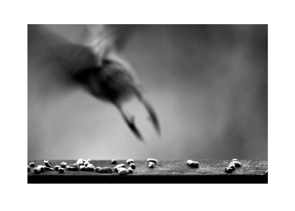 Weihnachtsfeiertags-Mistwetter-Langeweile-Vögel-von-Hinten-Fotografie