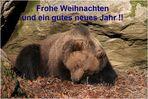 Weihnachtsgrüsse vom Nationalpark Bär !! (BY)