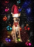 Weihnachtshase