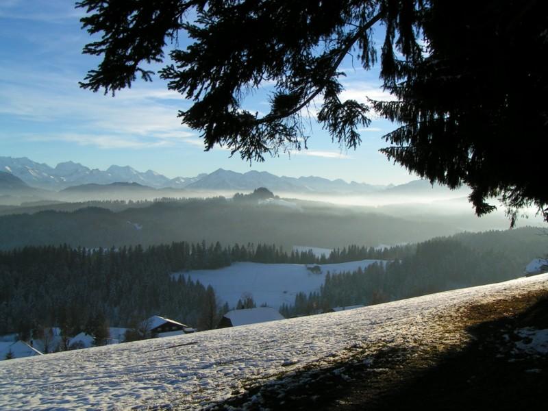 Weihnachtsspaziergang am Waldrand