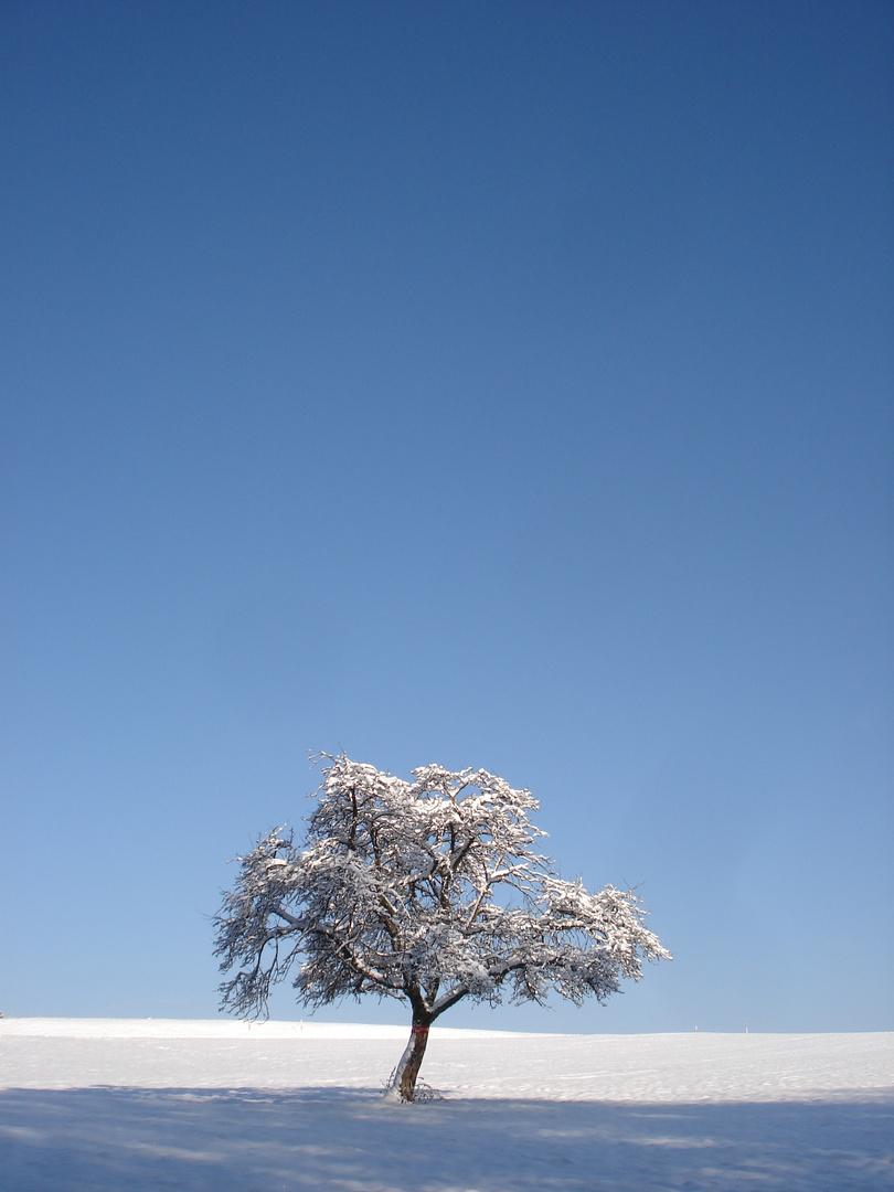 Weihnachtsspaziergang an der Kälte